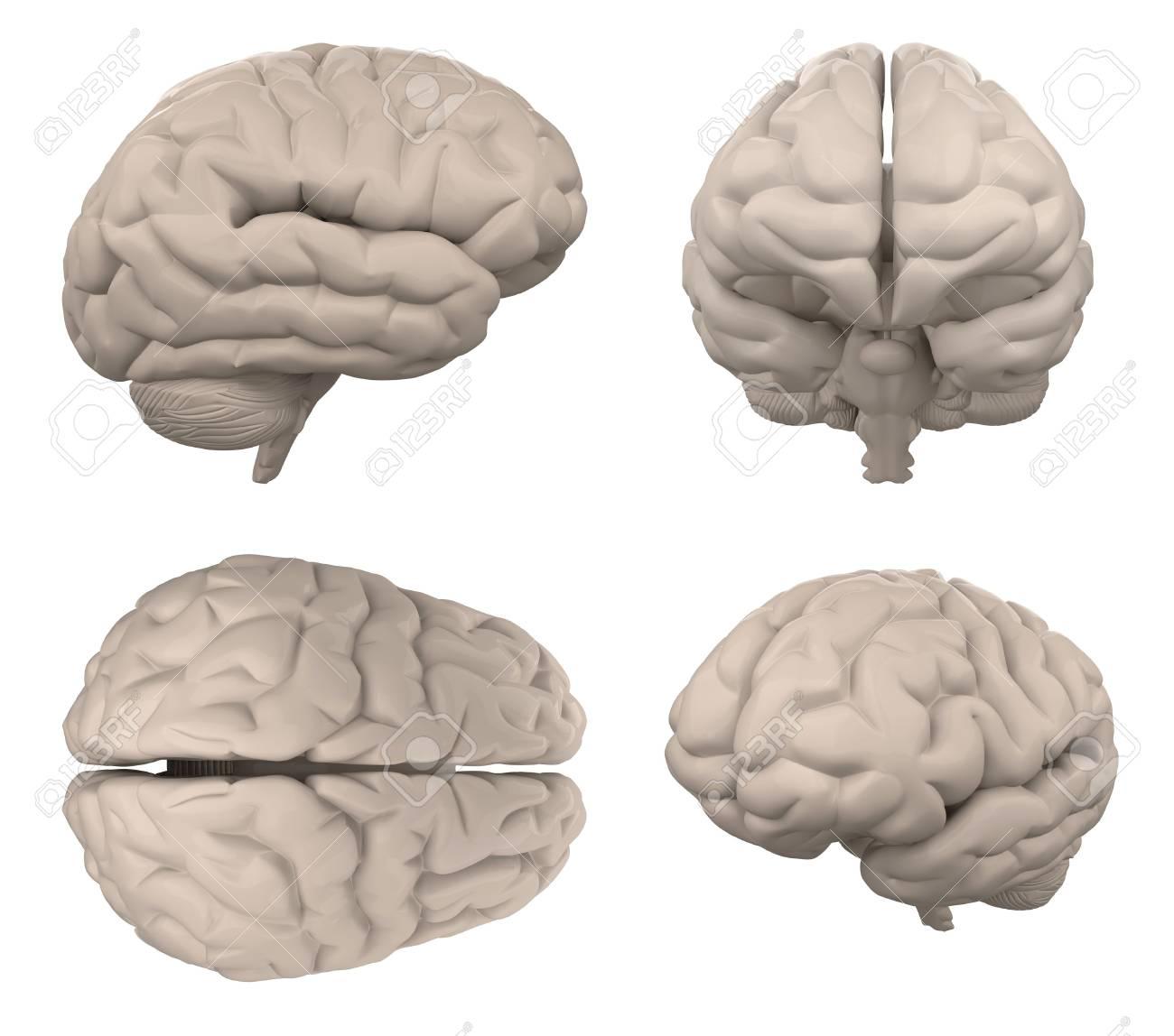 Gehirn Lokalisiert Auf Weißer Draufsicht Der Draufsicht 3d ...