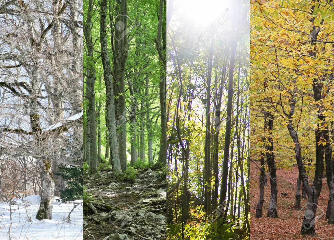 Four Seasons of a Forest