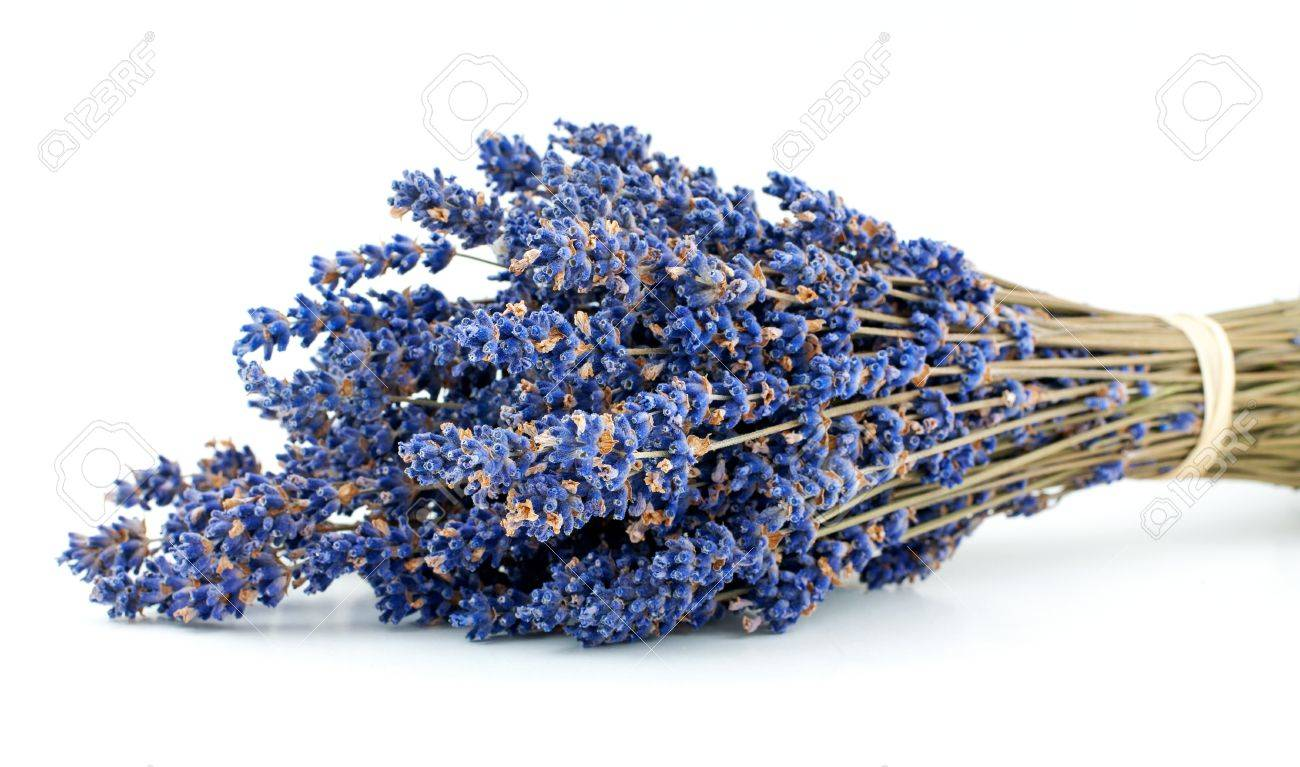 Lavender bouquet isolated on white background Stock Photo - 16290608