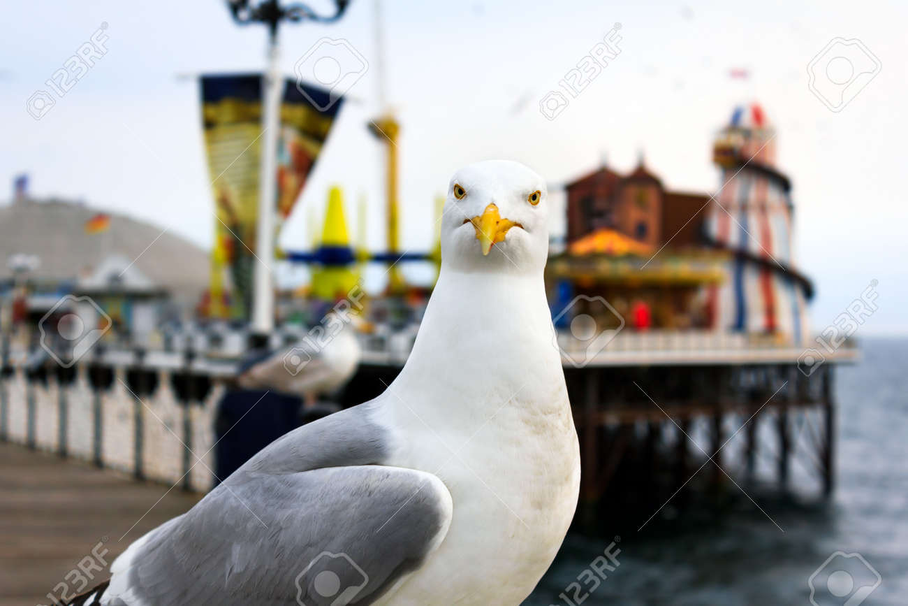 A seagull at Brighton, UK. Shallow depth of field. Focus on the eyes. Stock Photo - 32711465