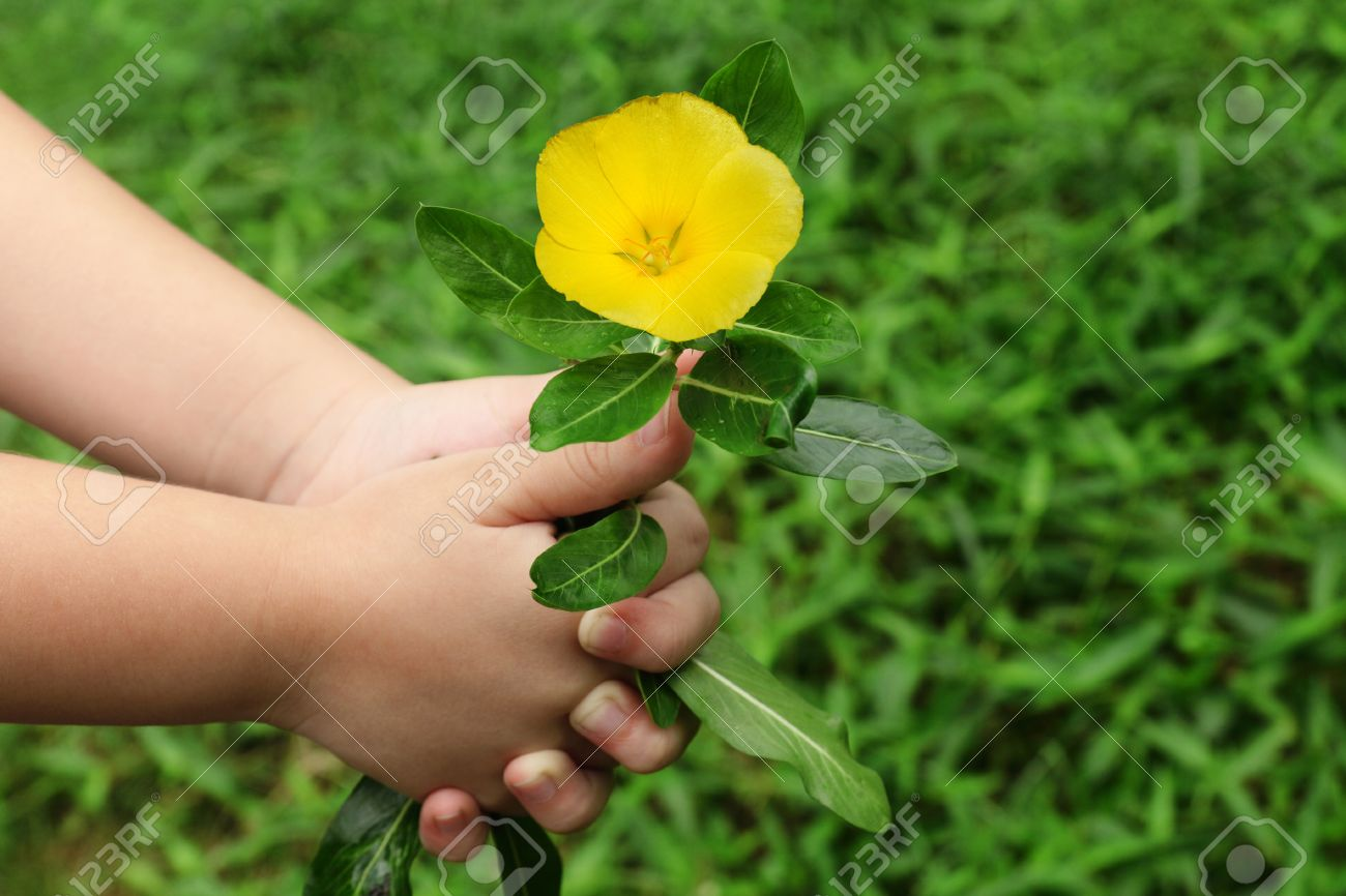 child hand giving a flower stock photo picture and royalty free