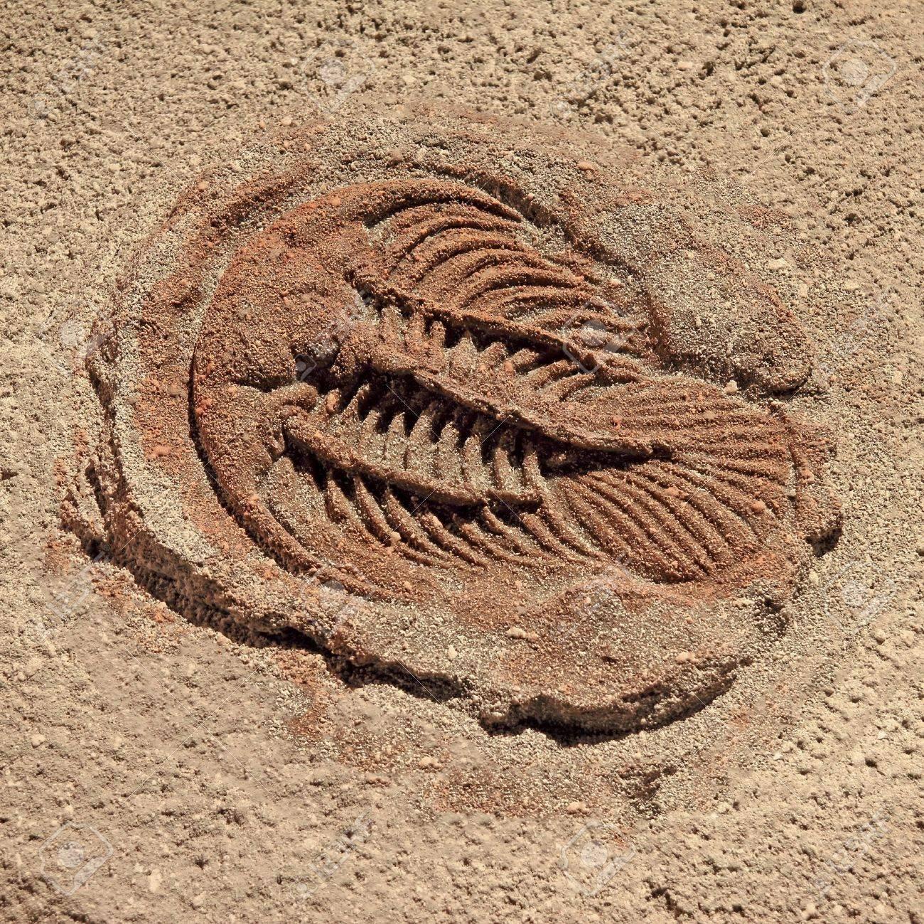 trilobite beetle turtle fossil Stock Photo - 12233227