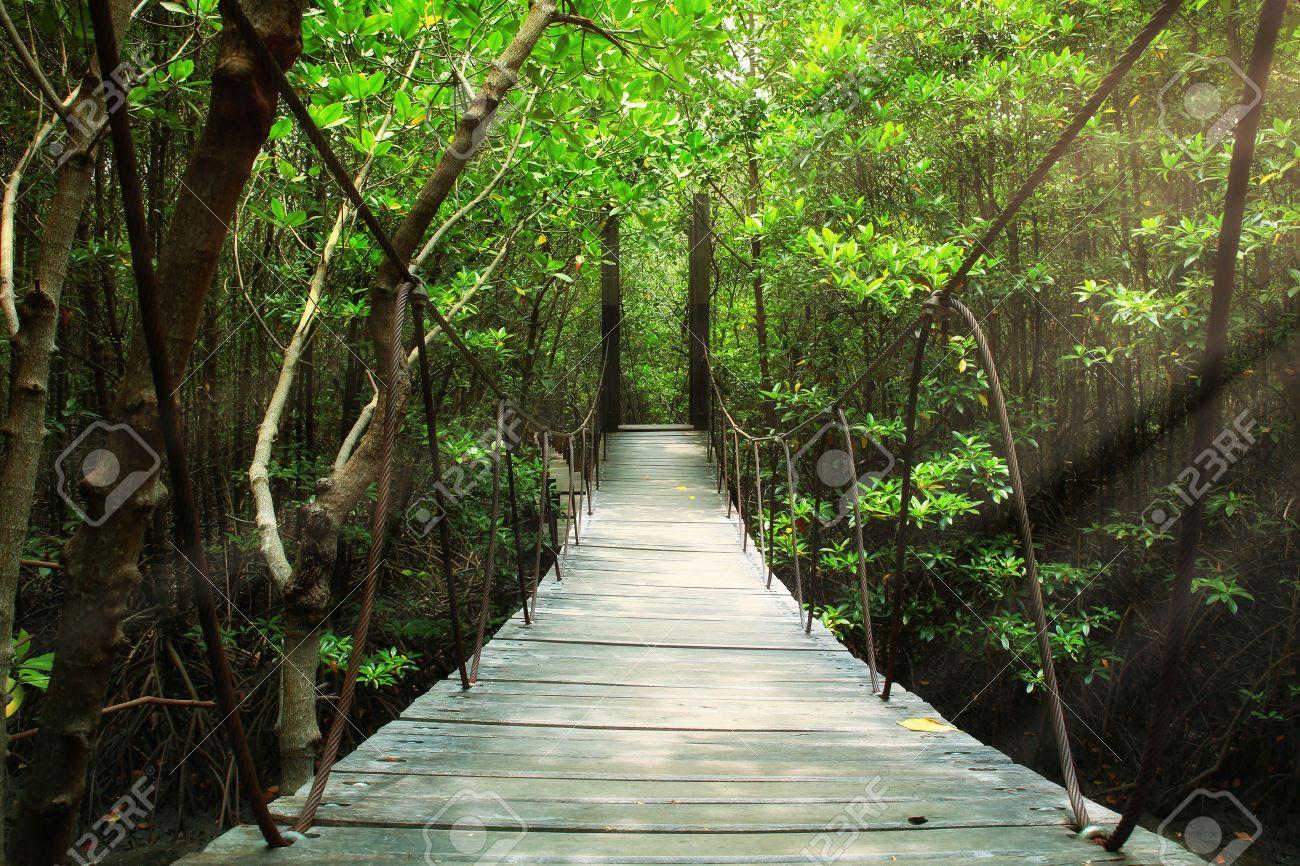 Suspension bridge in the forest - 32123688