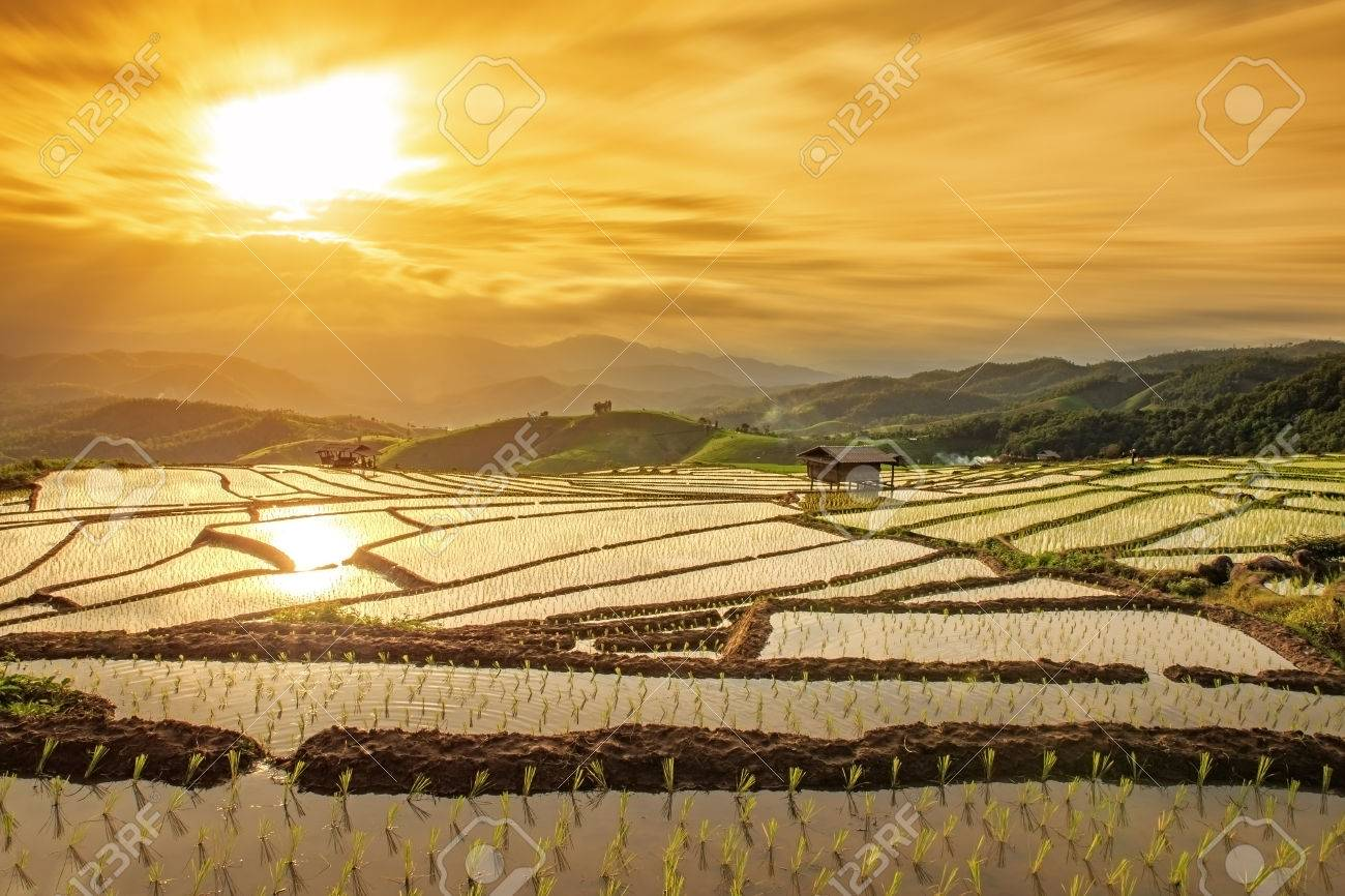 cottages on rice field in pa bong piang chiang mai thailand at sunset - 64269807