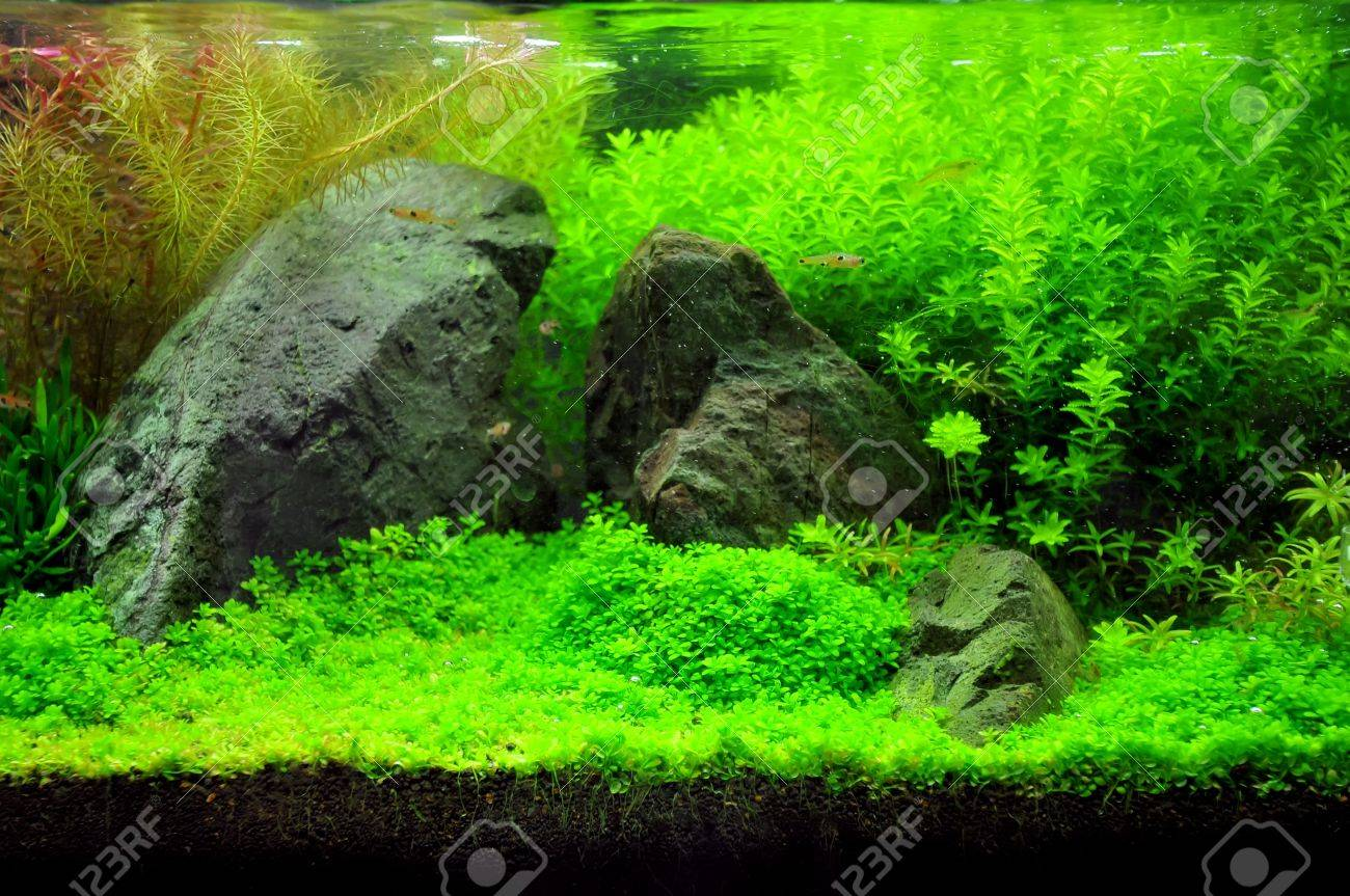 A beautiful planted tropical freshwater aquarium with fish Stock Photo - 20884199
