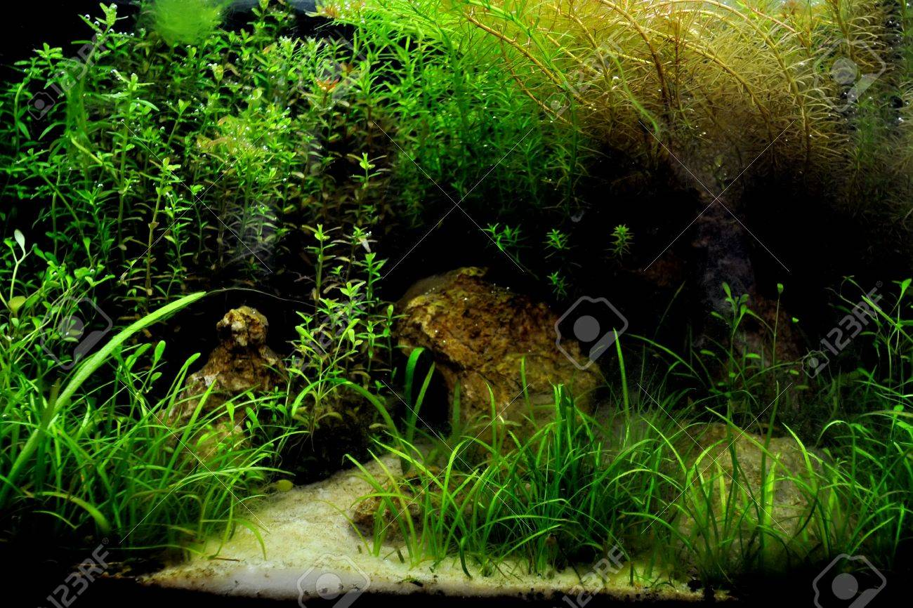 A beautiful planted tropical freshwater aquarium with fish Stock Photo - 20884205