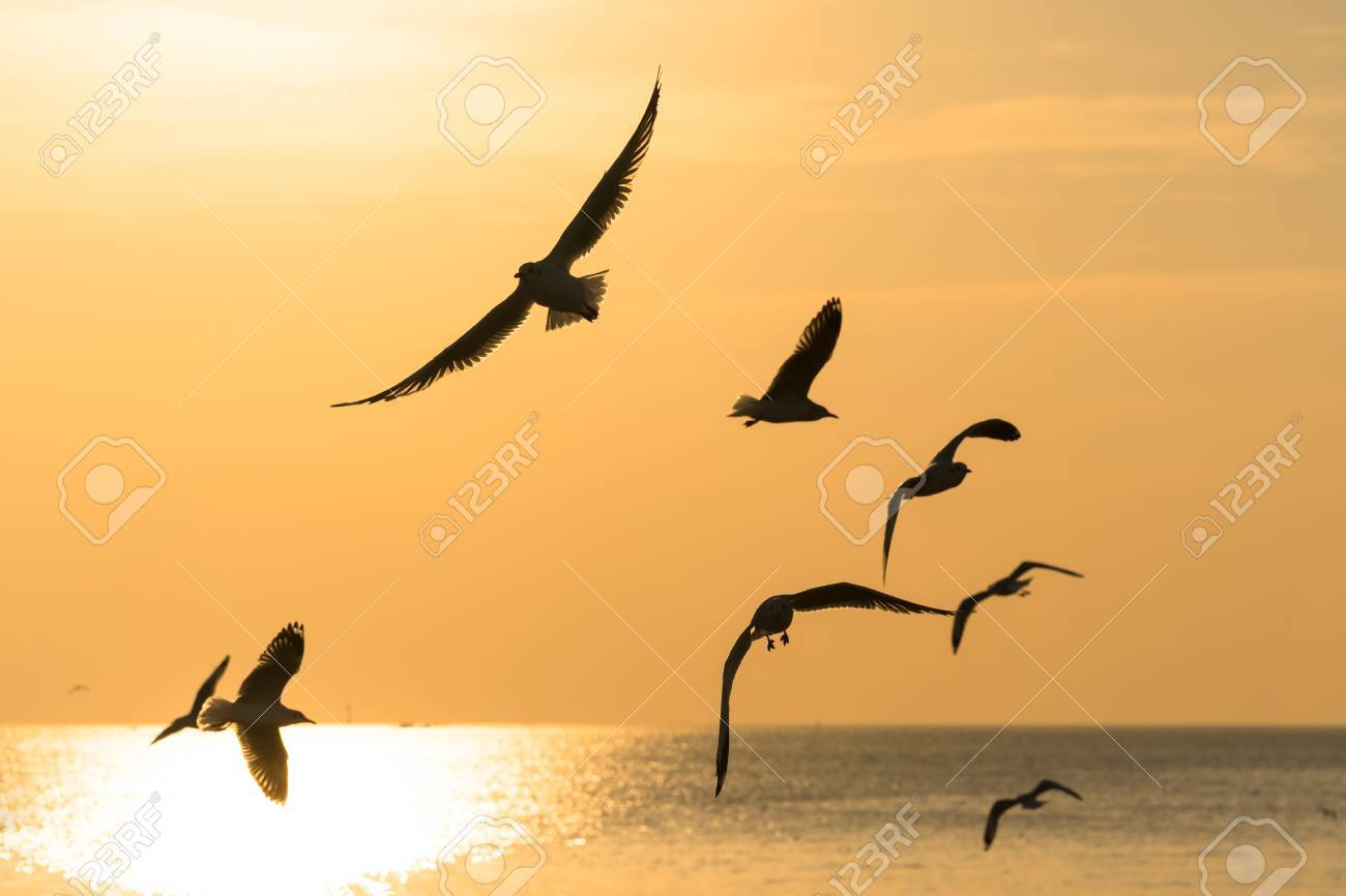 Backlit Group Of Birds Flying Over The Sea At Sunset