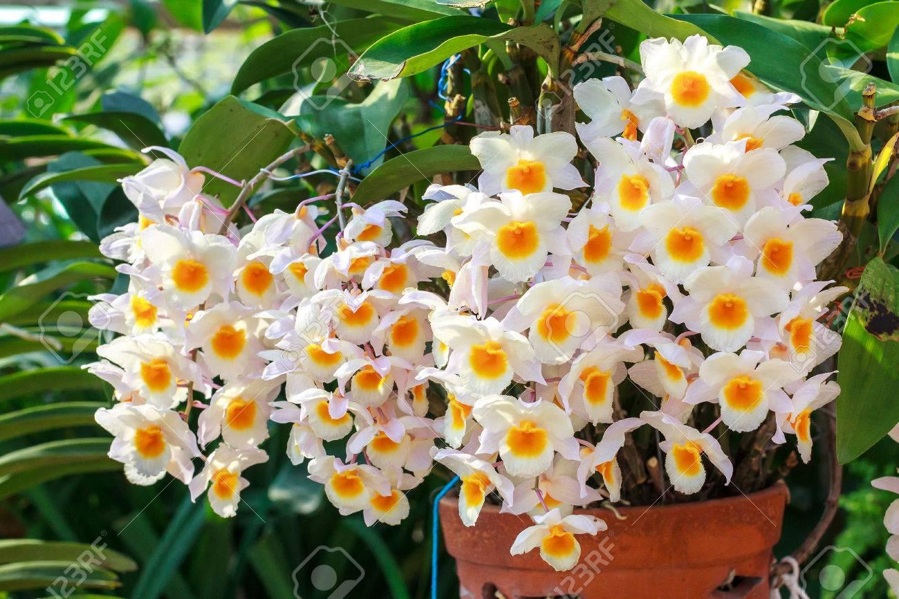 primer del phalaenopsis amarillo blanco de la orquídea ramo de