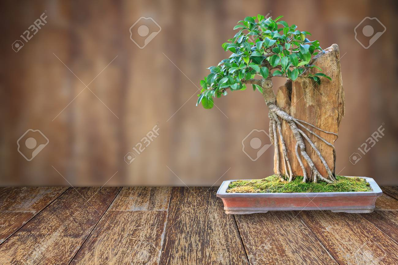 Bonsai Tree In A Ceramic Pot On A Wooden Floor And Blurred Wooden Stock Photo Picture And Royalty Free Image Image 57040474
