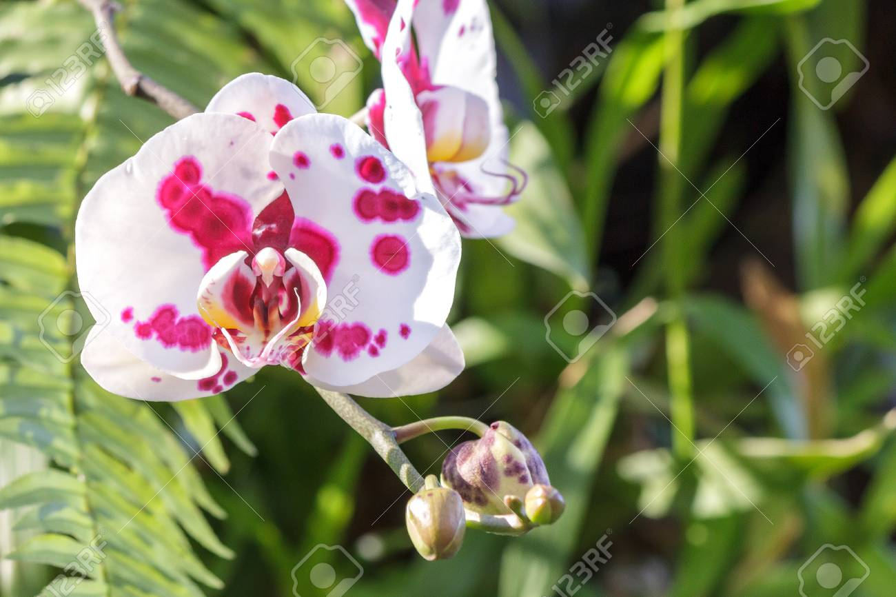 Beautiful orchid flower and green leaves background in the garden beautiful orchid flower and green leaves background in the garden at winter or spring day izmirmasajfo