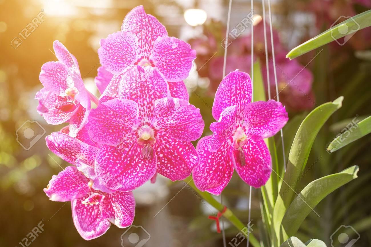 Belle Fleur D\'orchidée Dans Le Jardin à L\'hiver Ou Au Printemps Pour ...