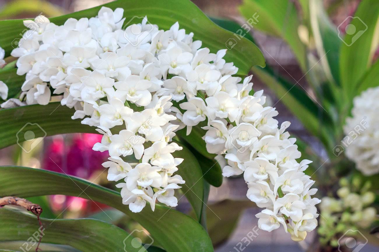Fleur D\'orchidée Dans Le Jardin à L\'hiver Ou Au Printemps Pour La ...
