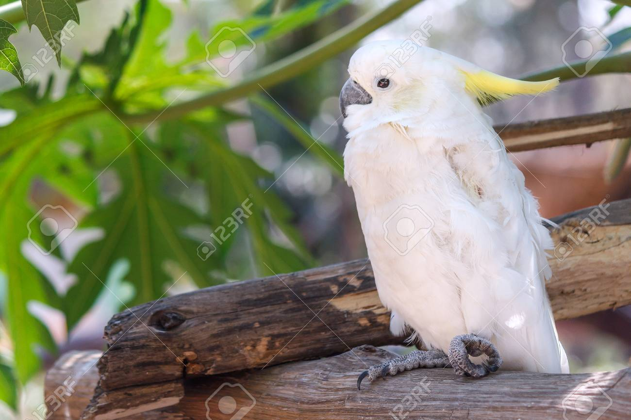 white cockatoo on a tree branch with green leaf background portrait