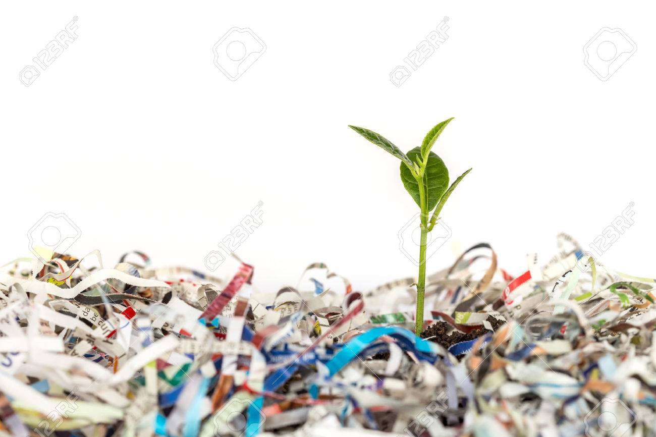 Young green plant in stack of scrap paper from paper cutter Banque d'images - 42909036