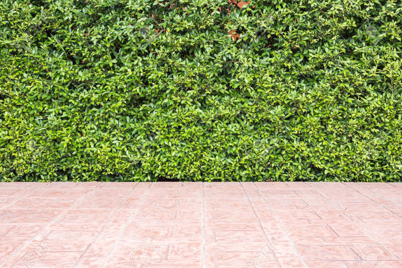 Floor Tile And Pattern Of Green Plant Wall Texture. Garden ...