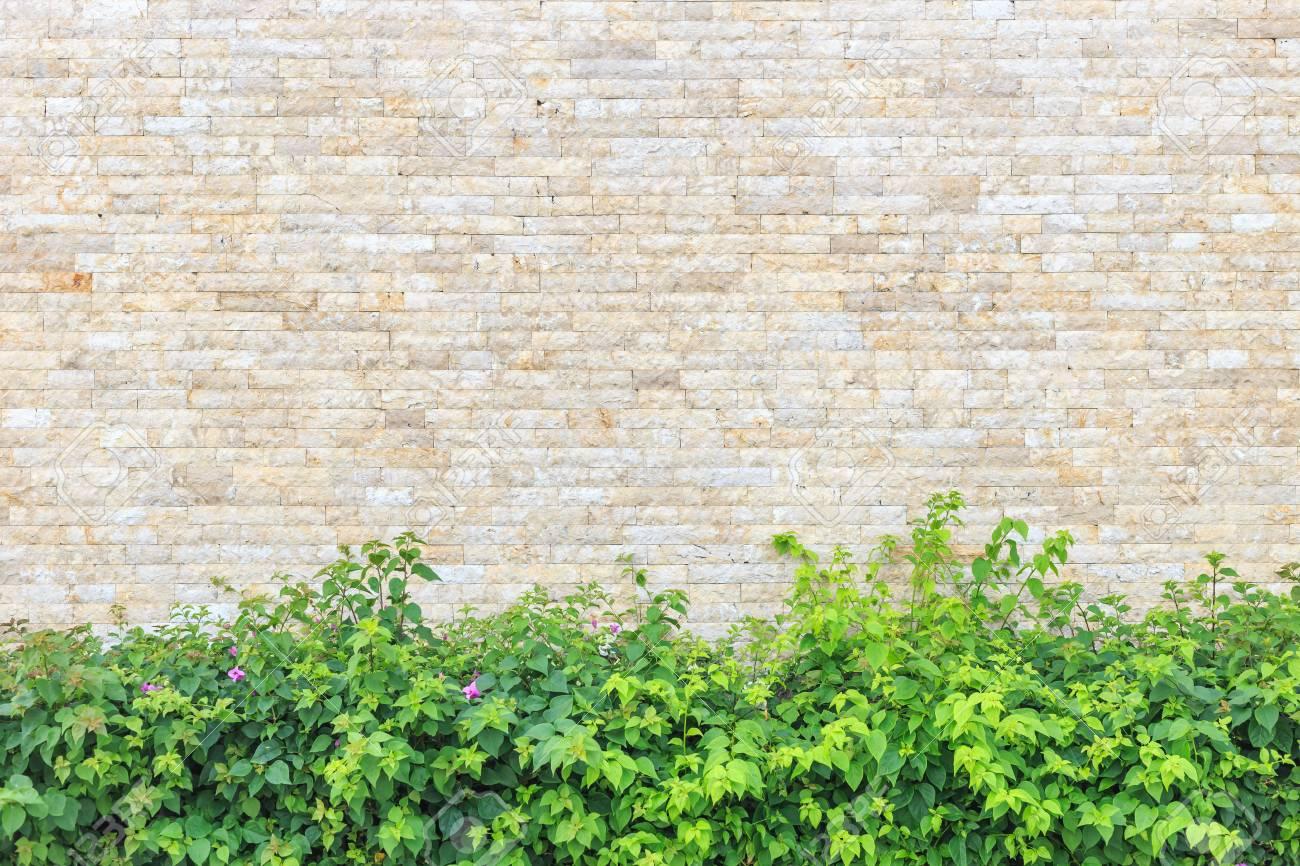 Paysage De Décoration De Jardin Avec Mur De Pierre Naturelle Banque