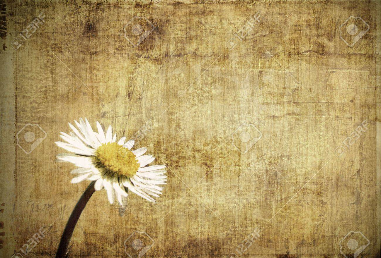 Grungy framed background with daisy - 4883590