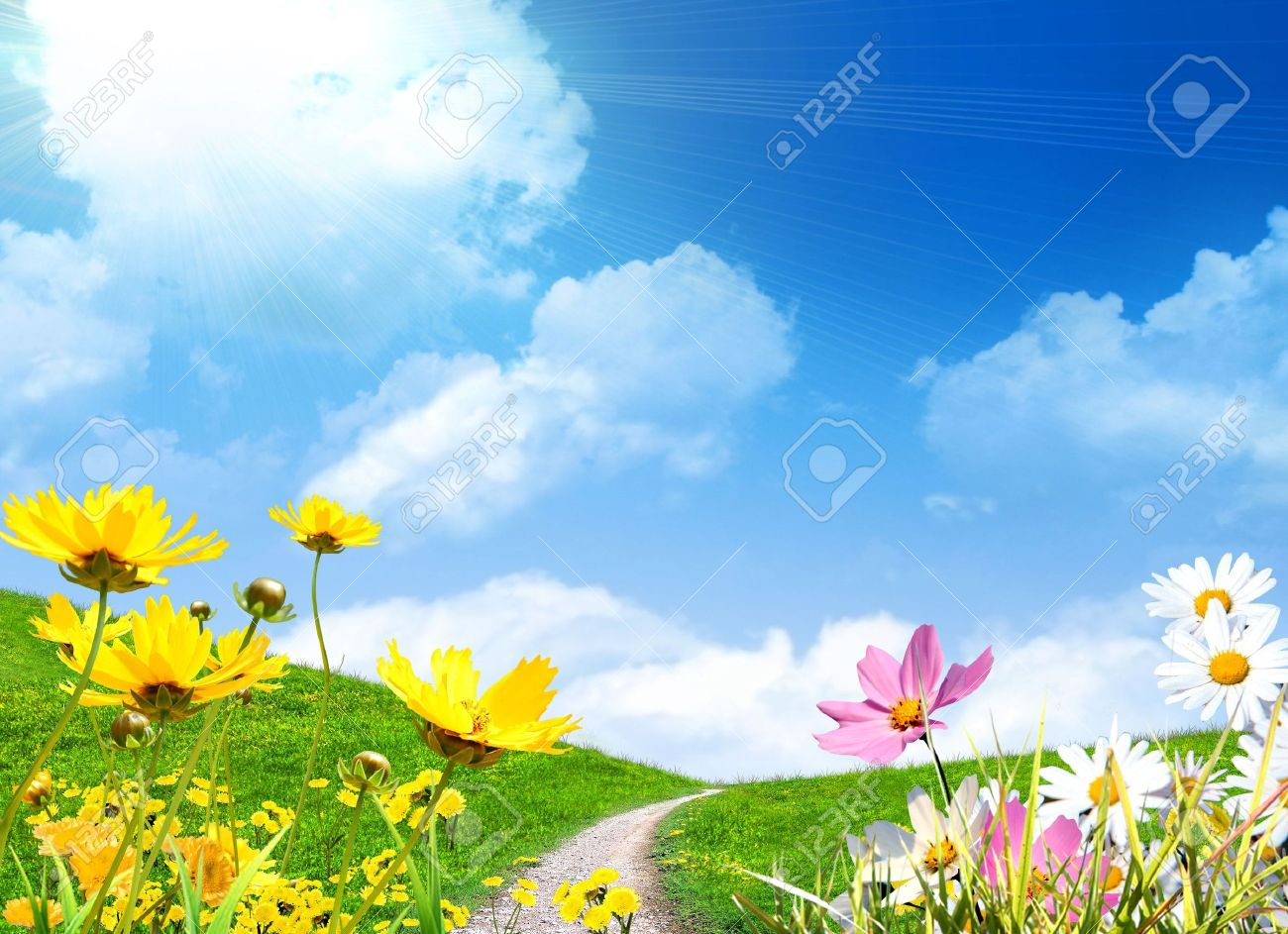 Spring flowers and a grassy meadow - 4923717