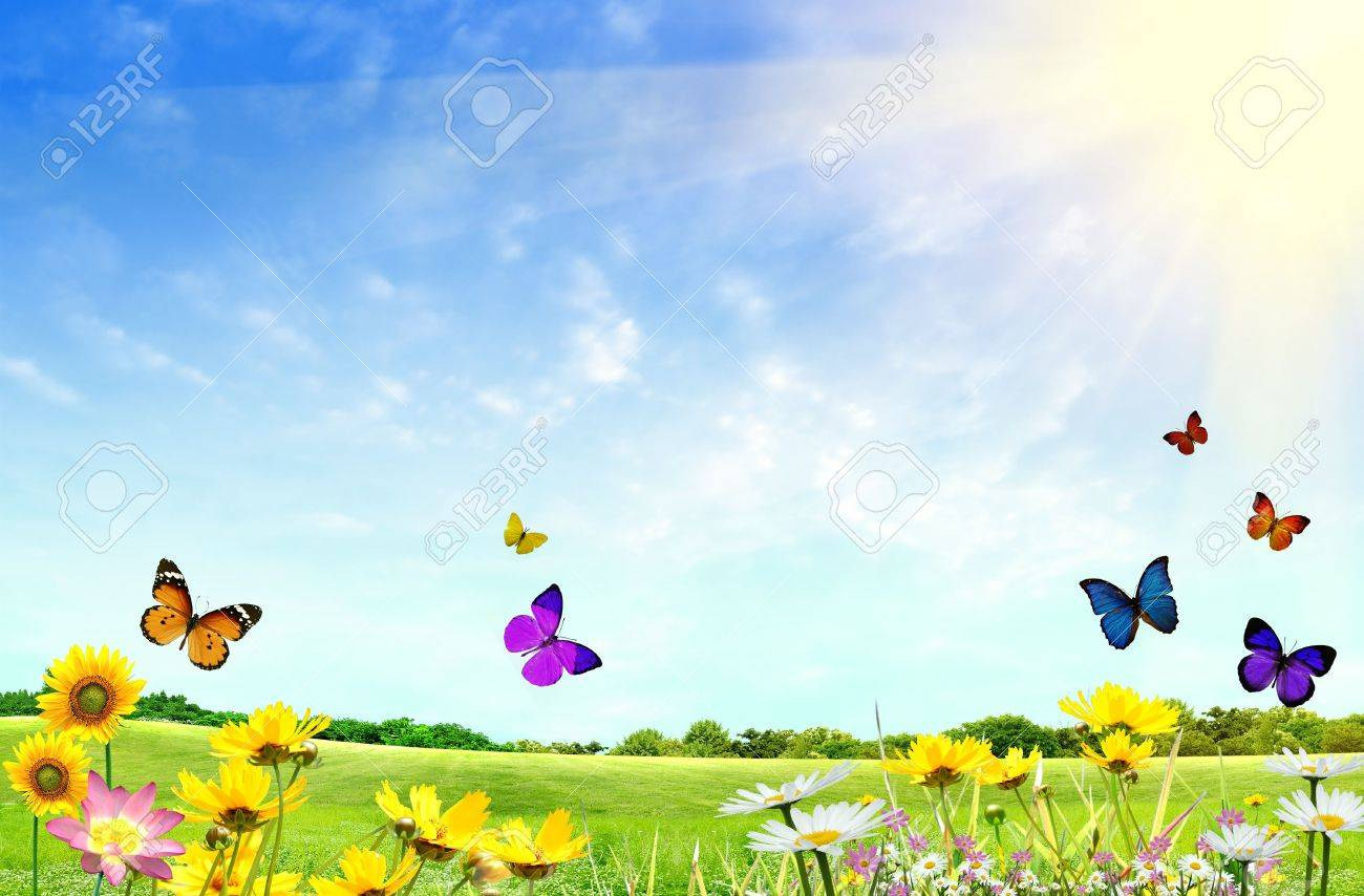 Flowery field with grass and butterflies - 4999998