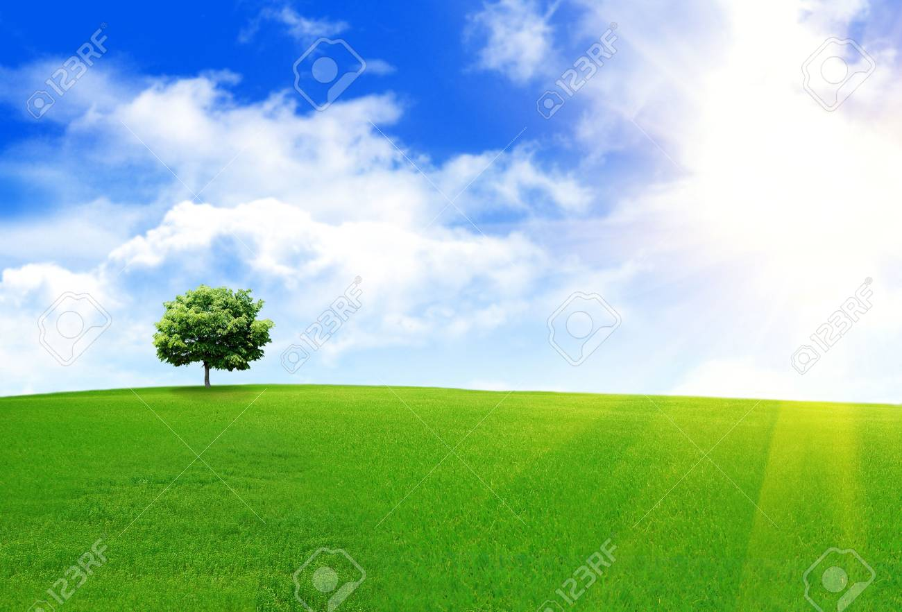 Spring landscape with a lone tree on a hill Stock Photo - 5055657