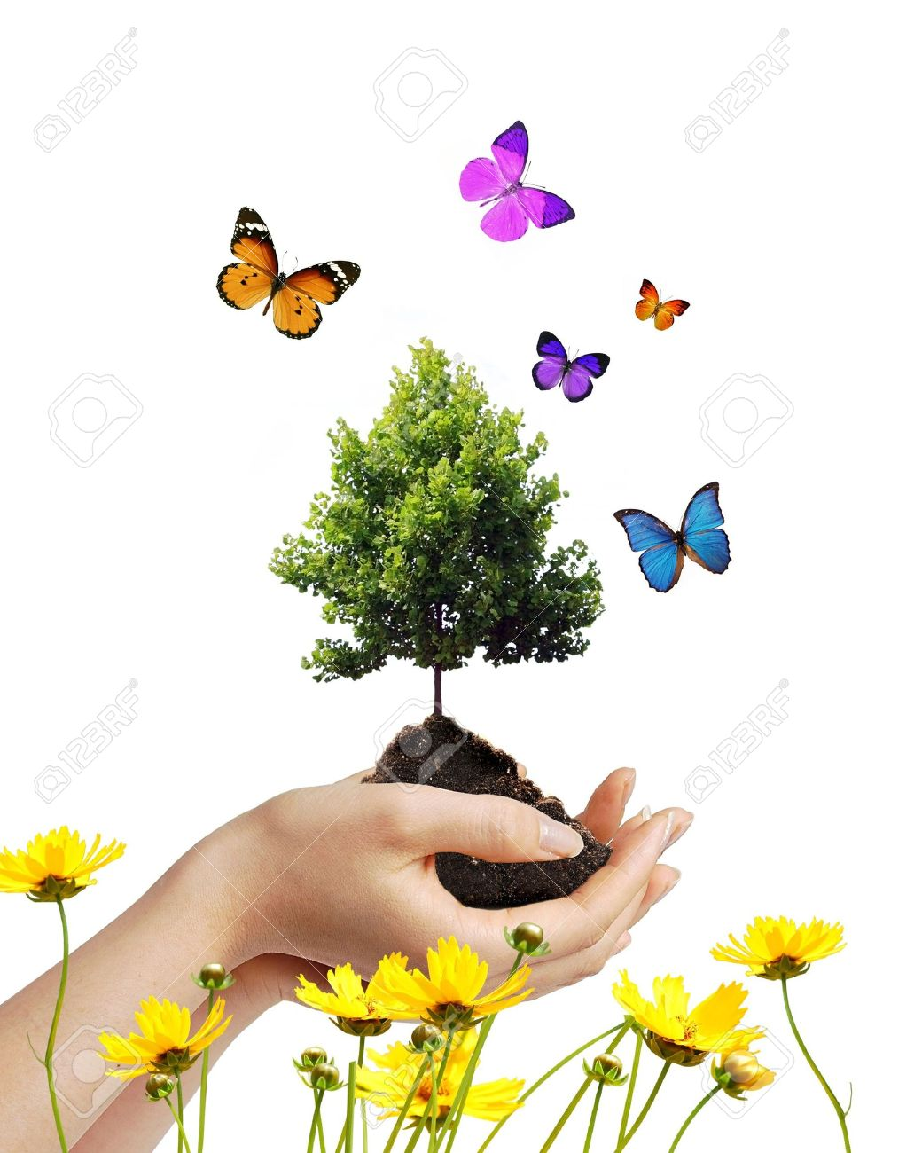 Hands holding dirt and a growing tree with butterflies and flowers - 5201008