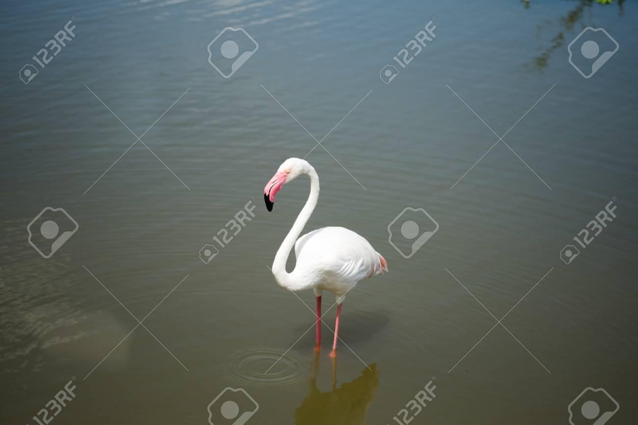 pássaro flamingo fotos retratos imágenes y fotografía de archivo