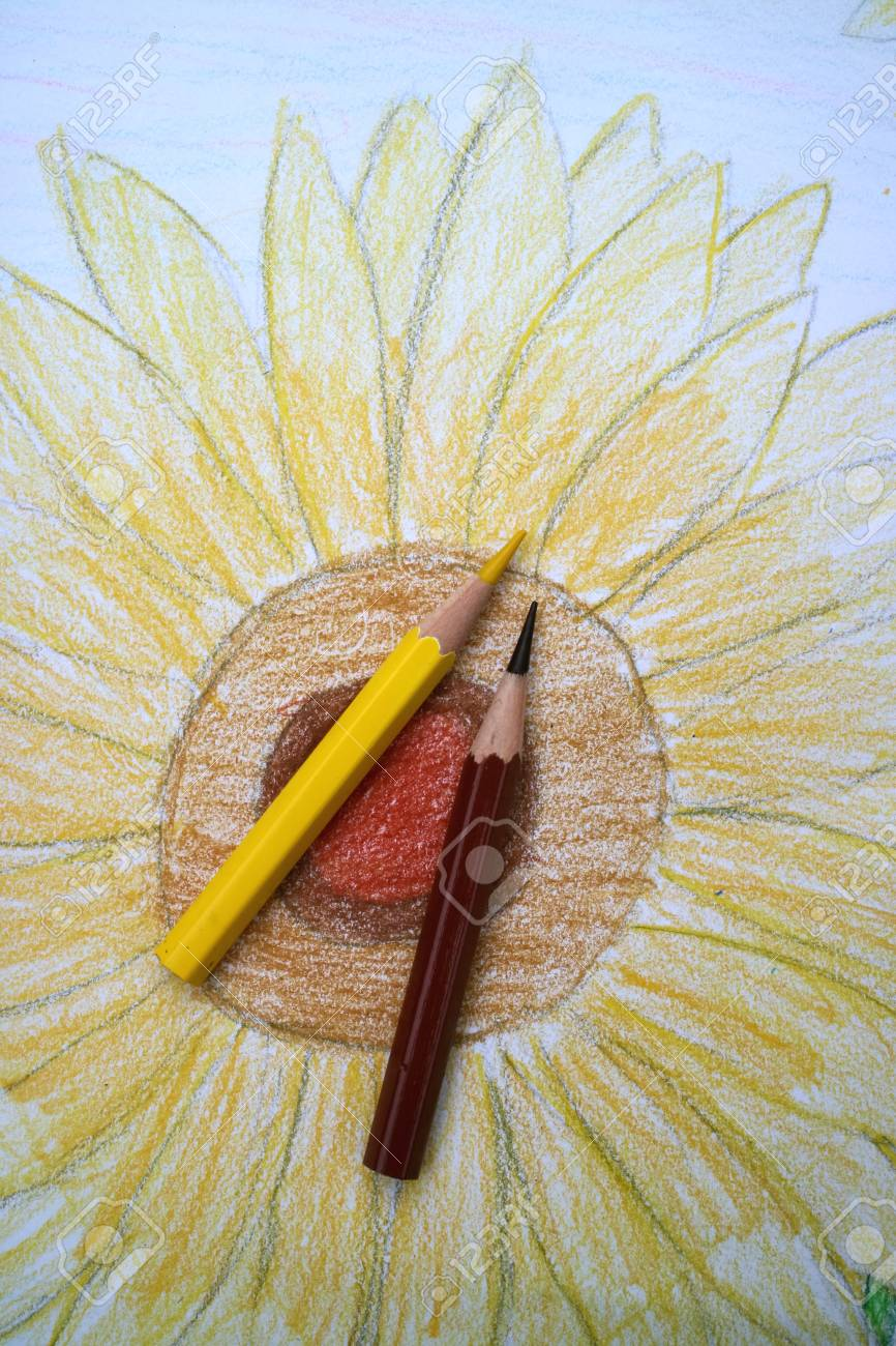 Colored Pencils With Sunflower Stock Photo Picture And Royalty Free Image Image 42487632