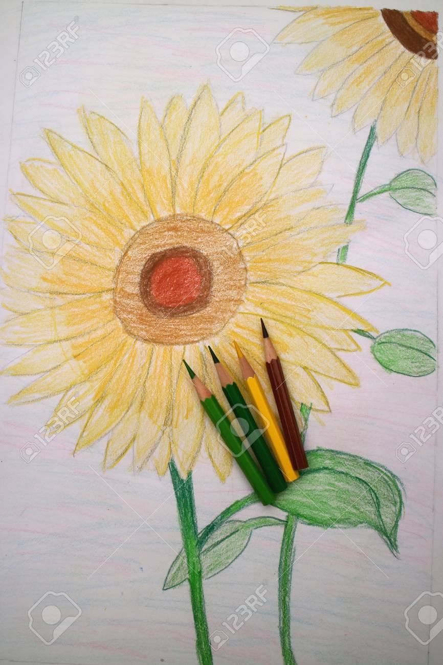 Colored Pencils With Sunflower Stock Photo Picture And Royalty Free Image Image 42487693
