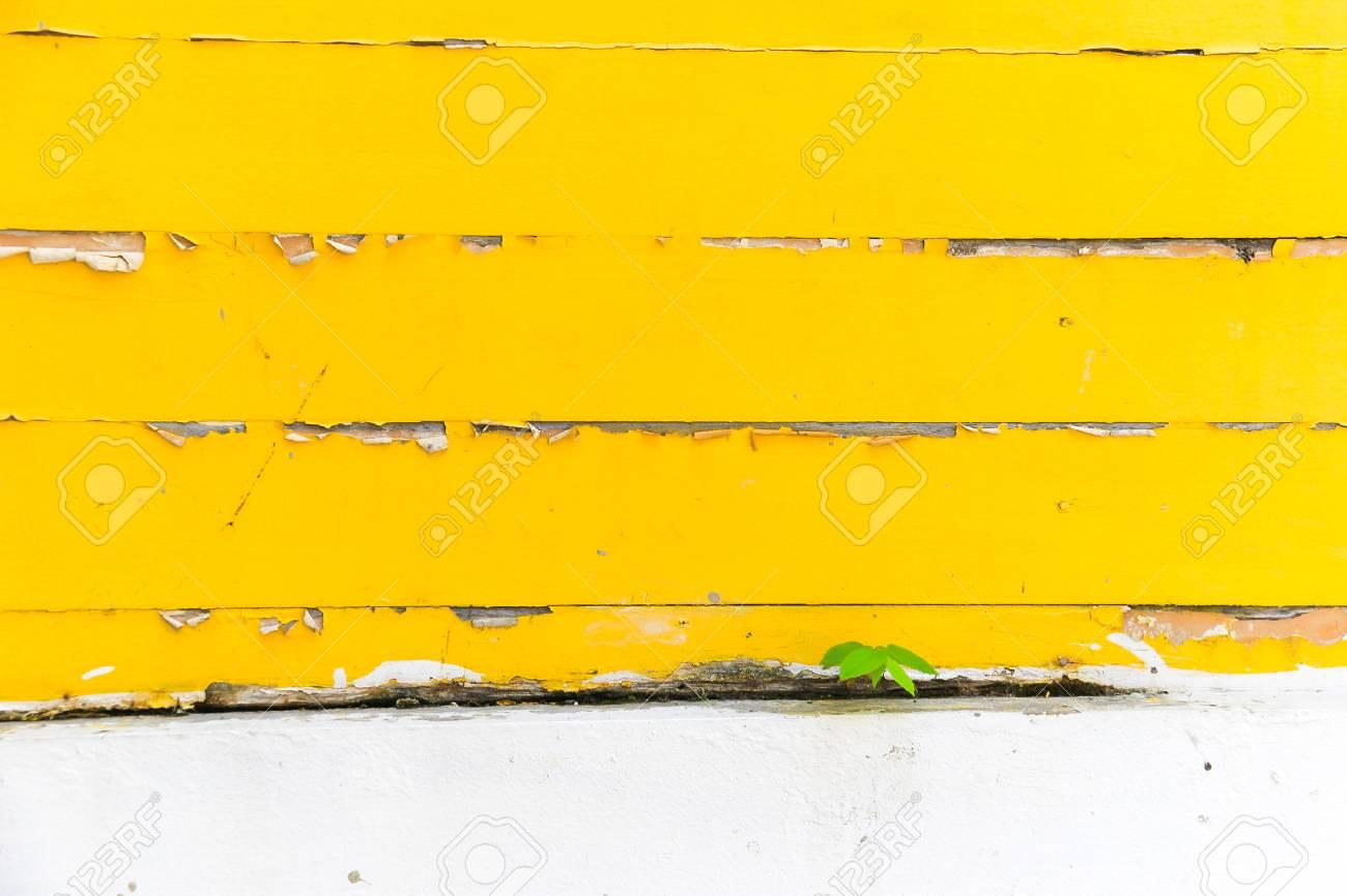 Peeling Jaune Peint Sur Un Mur En Bois Avec Plante Fond De Textures Peinture Fissurée