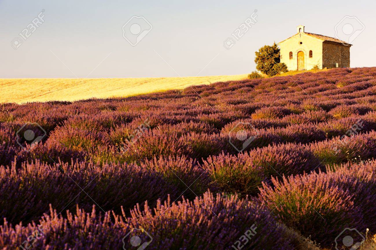 chapel with lavender field, Plateau de Valensole, Provence, France Stock Photo - 12338676