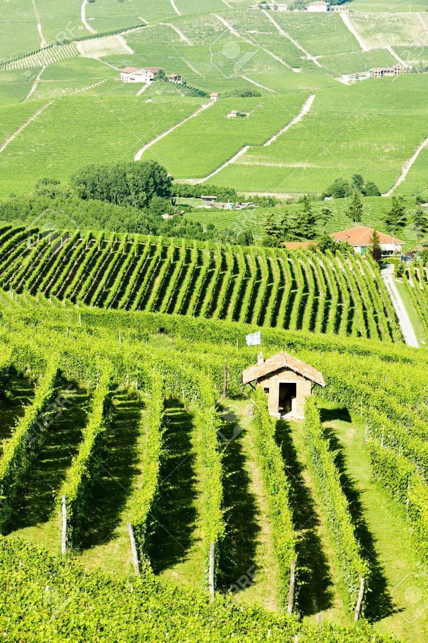 vineyars near Barolo, Piedmont, Italy Stock Photo - 17176669