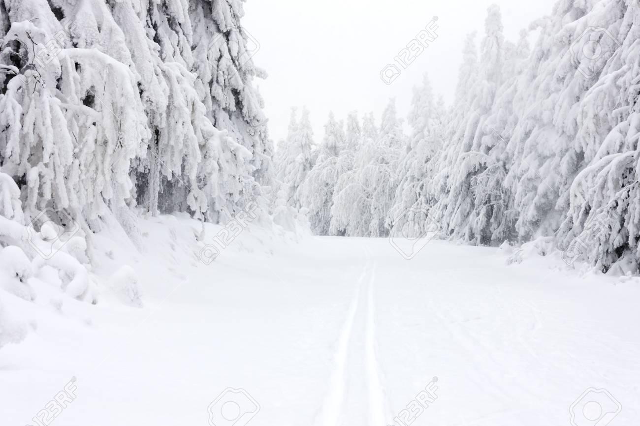 Paisaje De Invierno, Montañas Orlické, República Checa Fotos, Retratos,  Imágenes Y Fotografía De Archivo Libres De Derecho. Image 33905157.