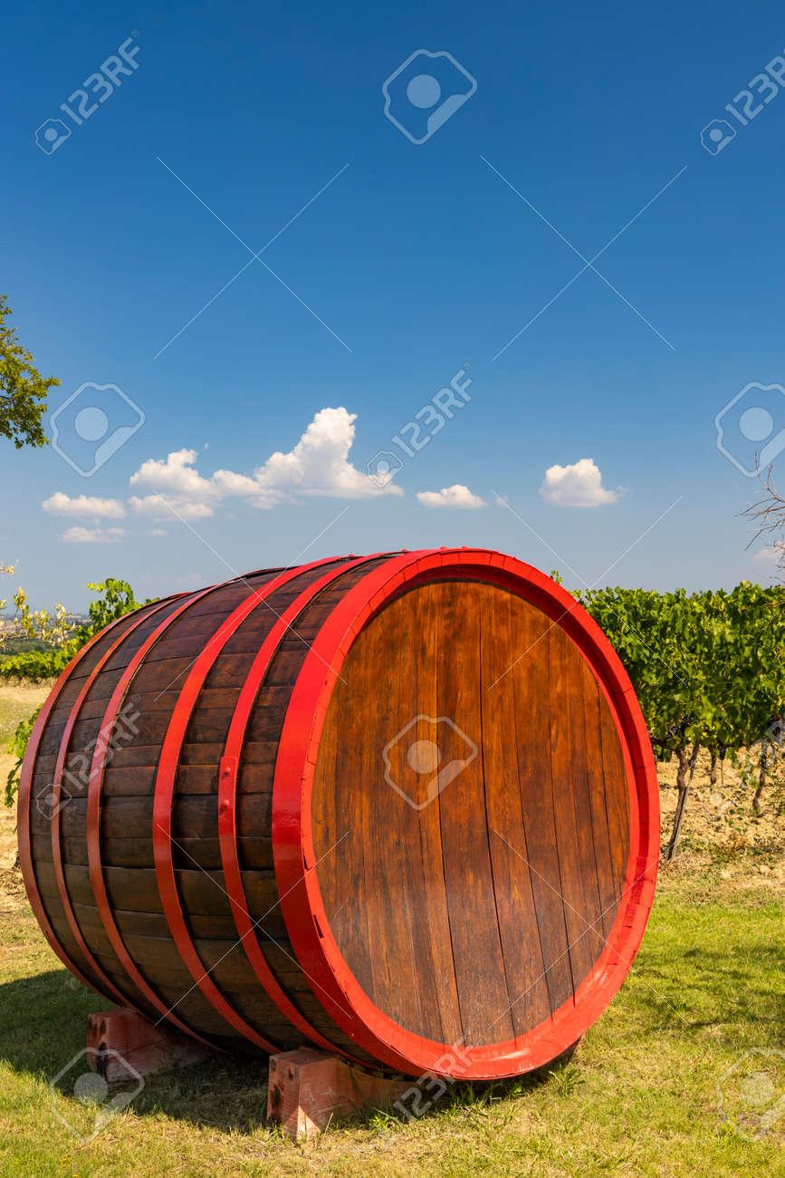 Wine barrel in vineyard, Tuscany, Italy - 169976272