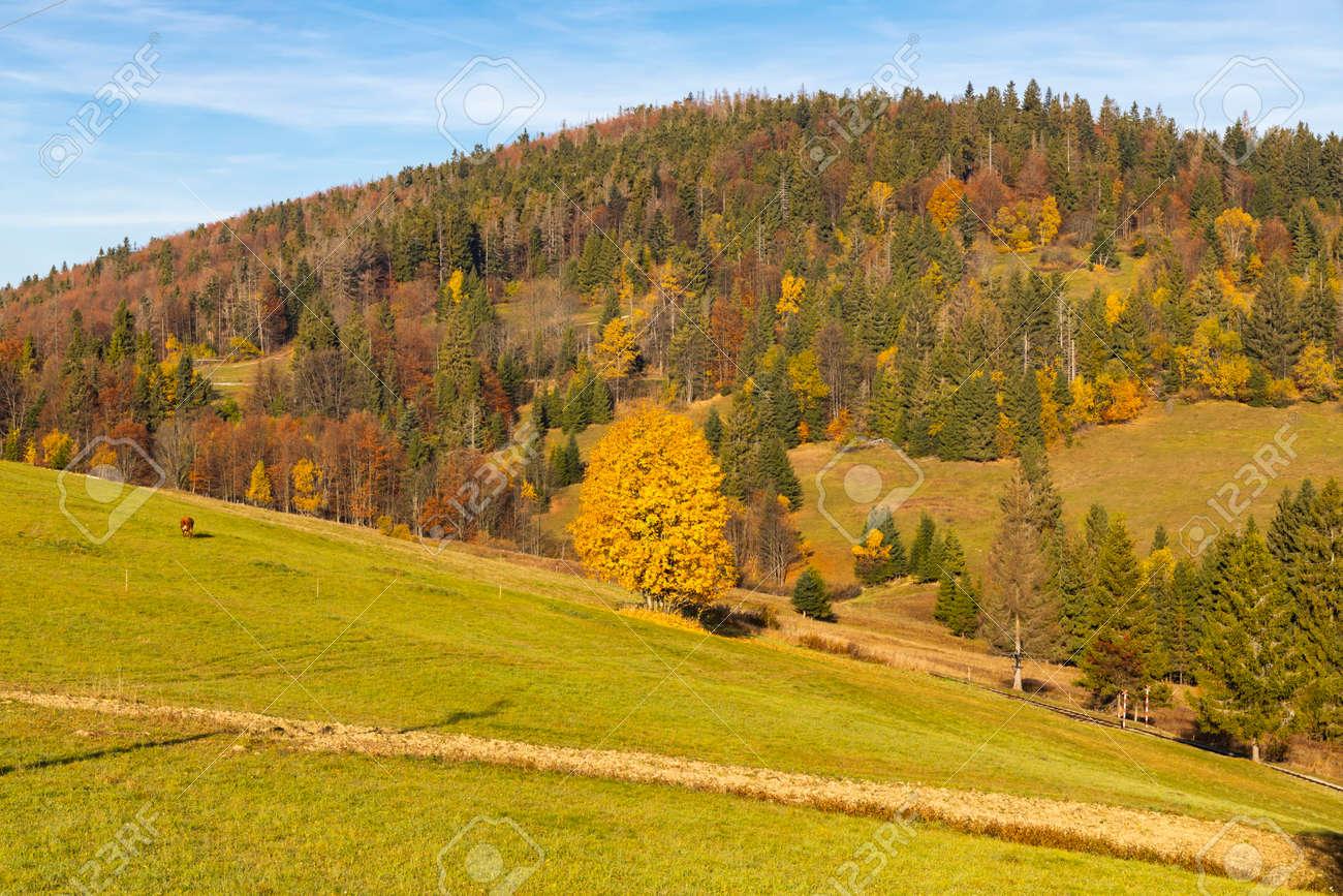 autumn landscape near saddle Beskyd in Slovakia - 169975721