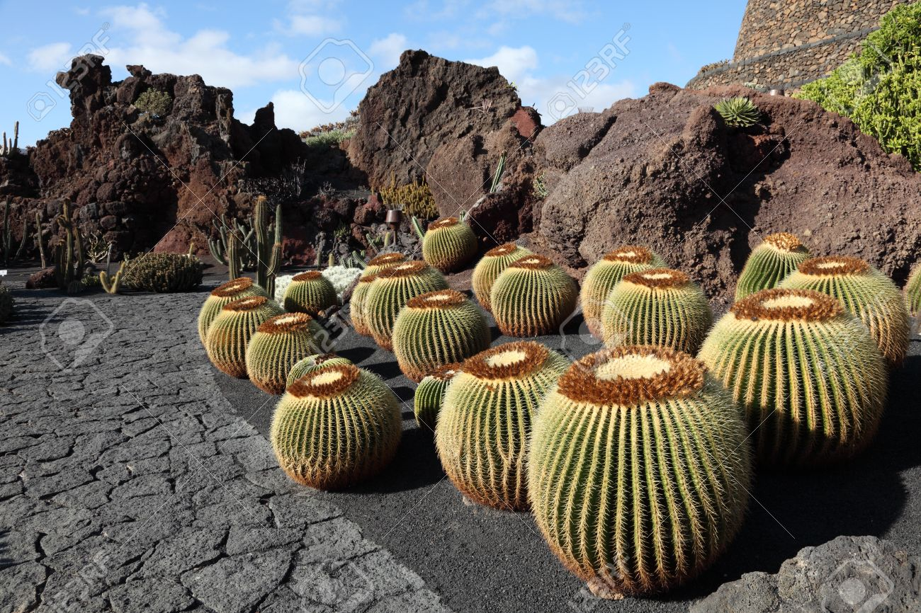 cactus garden jardin de cactus on canary island lanzarote spain stock photo - Jardn De Cactus
