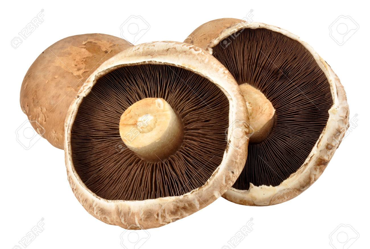 Large Raw Portobello Mushrooms Isolated On A White Background Stock Photo Picture And Royalty Free Image Image 48676042