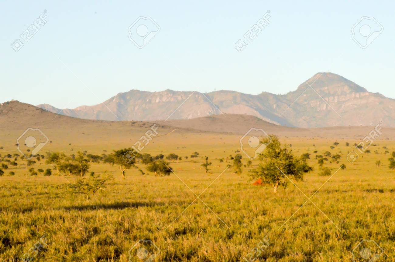 Photo tour of the savannas and mountains of South Africa 41