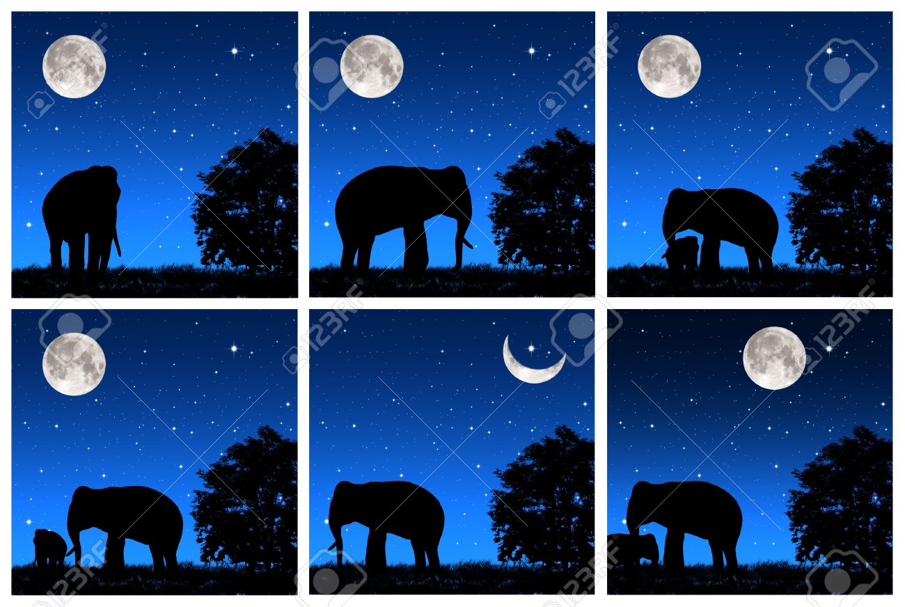 Collection shadow elephant tricky at night Stock Photo - 13236114