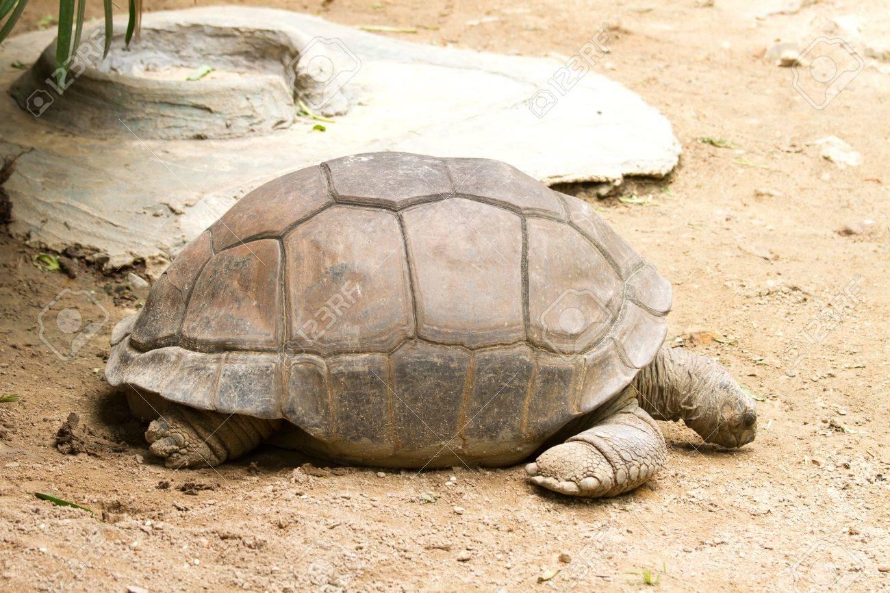 Giant tortoises Stock Photo - 14516212