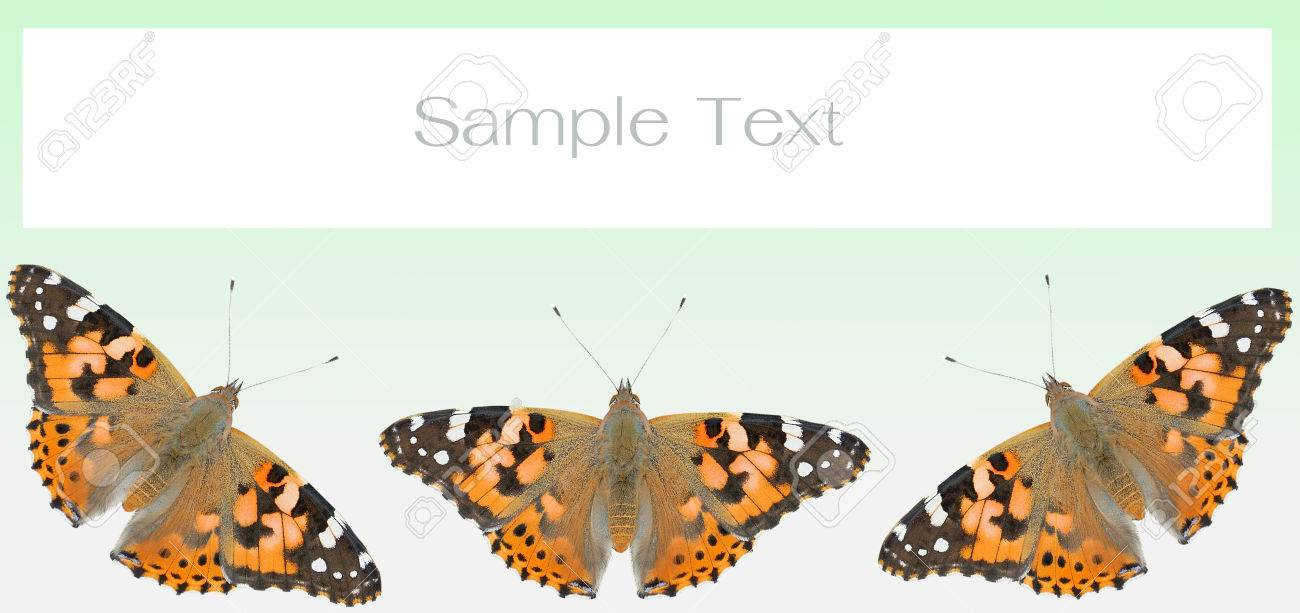 Greeting Card Or Invitation For Butterfly (Painted Lady) Theme ...
