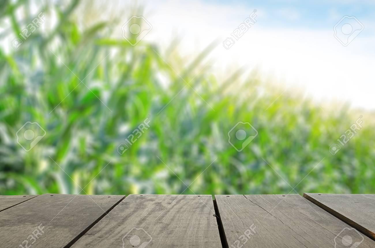 Imagen De Desenfoque Y La Falta De Definición De La Madera Terraza Y Campo De Maíz Dulce Y La Flor Con La Abeja Para El Uso Del Fondo