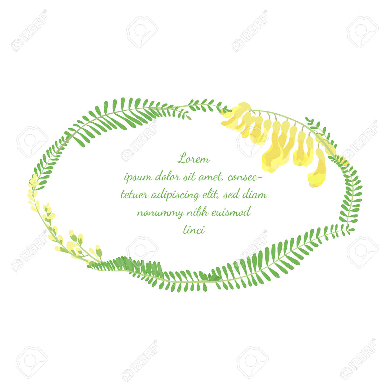 Frame with Elliptical Shape made with Hand Drawn Colorful Leaves and Flowers of a Astragalus Propinquus. Vector Illustration for Traditional Medicine Products, Posters, Designs. - 166149136