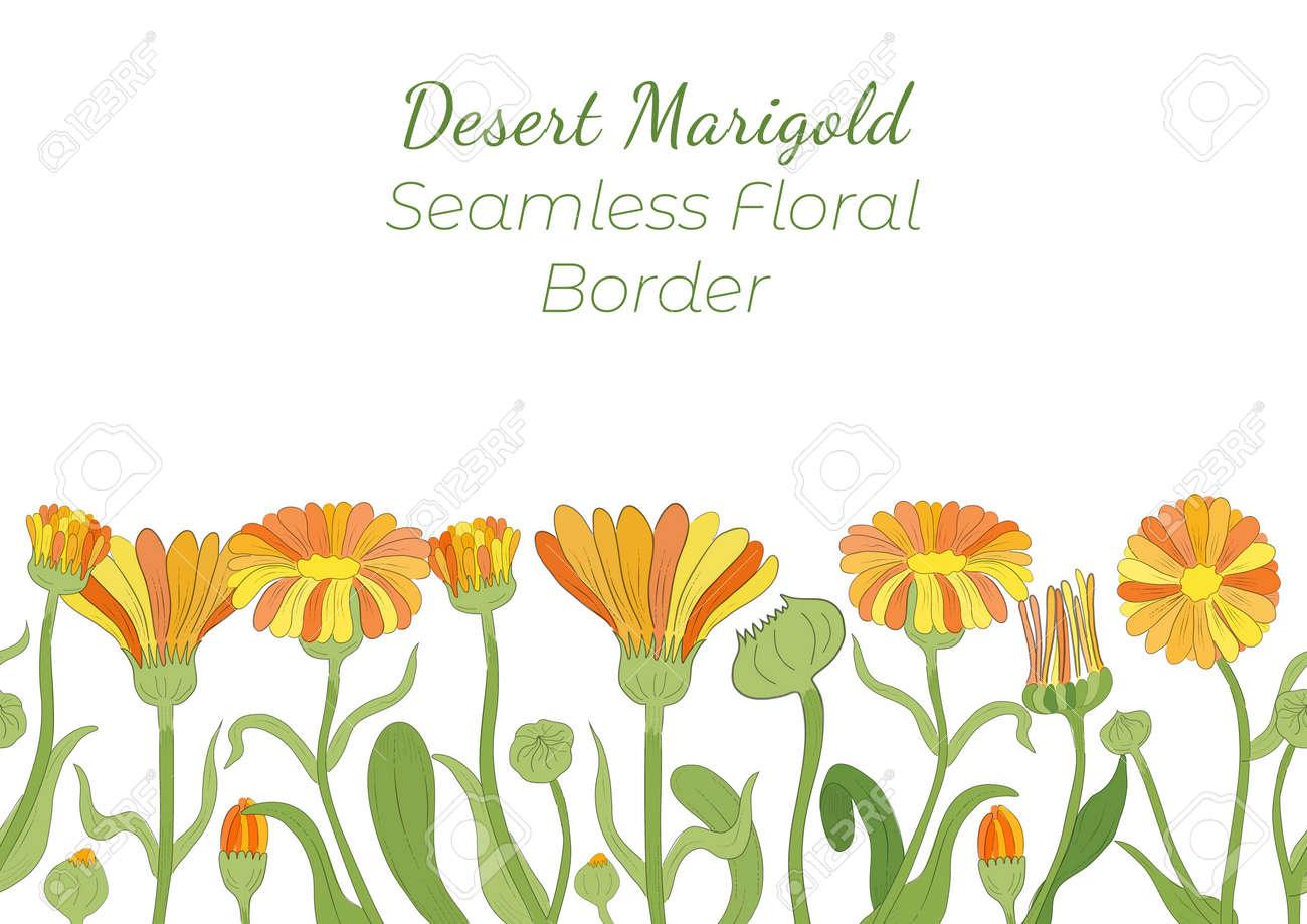 Seamless Border Made with Hand Drawn Calendula - 166580801