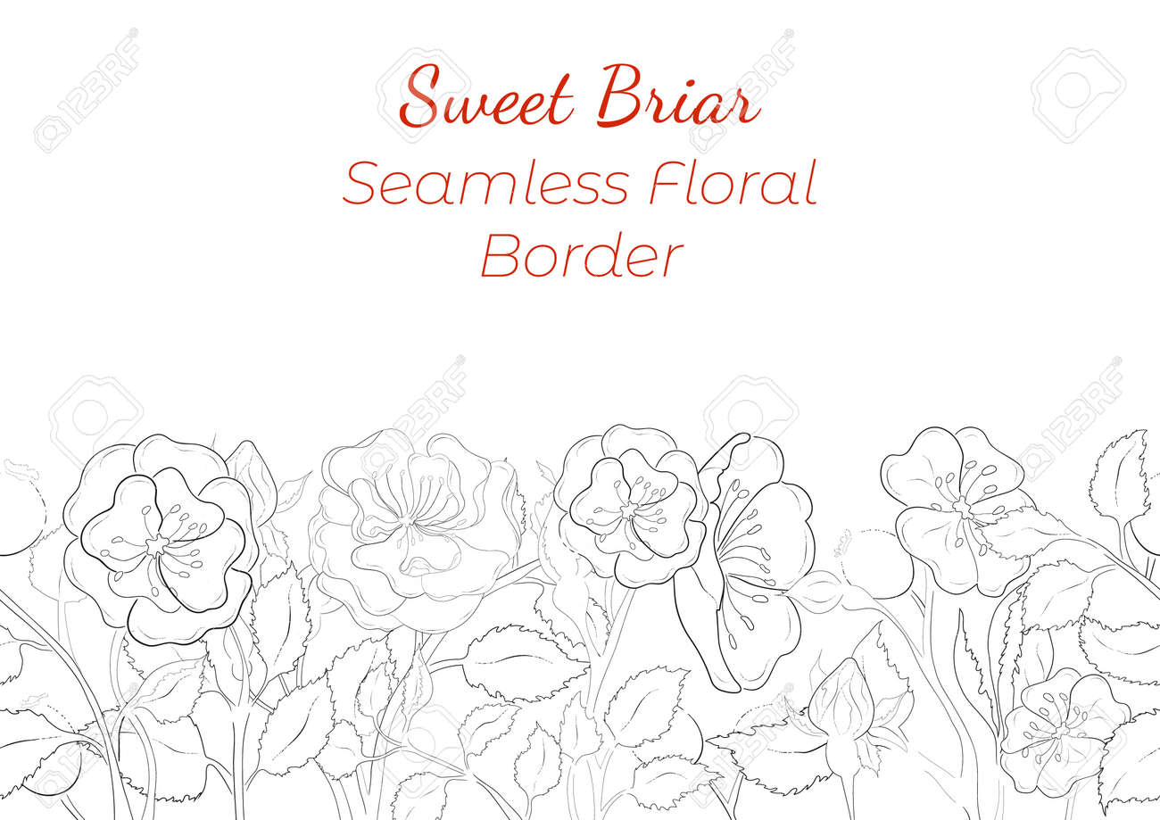 Seamless Border Made with Hand Drawn Rosa Canina Arranged Horizontally. Dog-Rose branches, flowers, buds, leaves, fruits made of contour only. Composition for Any Designs, Advertising etc. - 166580802