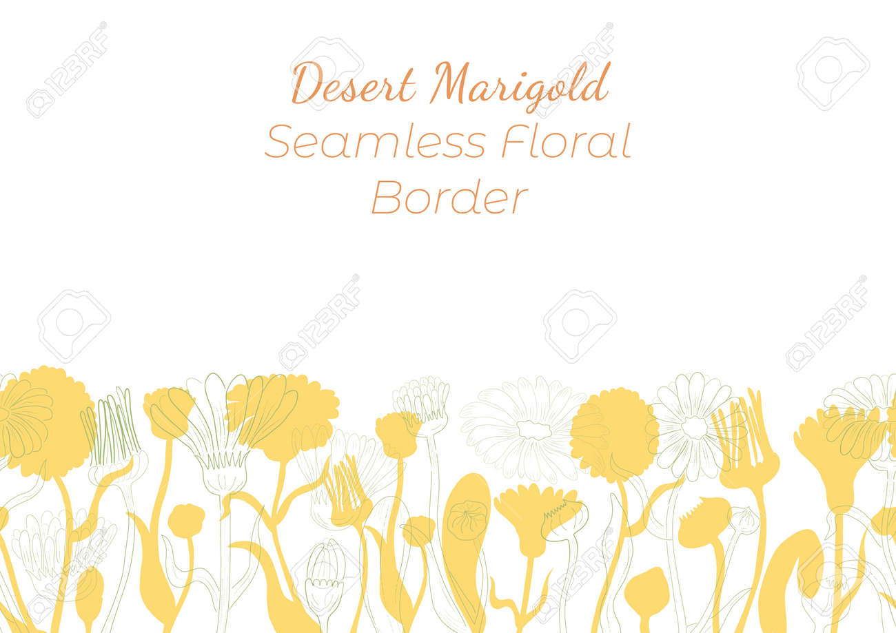 Seamless Border Made with Hand Drawn Corn Marigold Arranged Horizontally. Marigold branches, flowers, buds, leaves, fruits made of contour and silhouette. Composition for Any Designs, Advertising etc. - 166743590