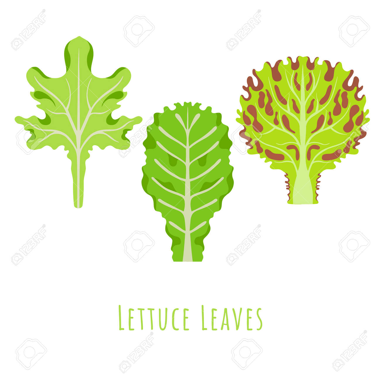 Three isolated different leaves of the Lettuce made in flat style. No outlined Symmetrical Leaves shapes filled with color only. Colorful vector illustration for product design, web and print usage. - 167305665