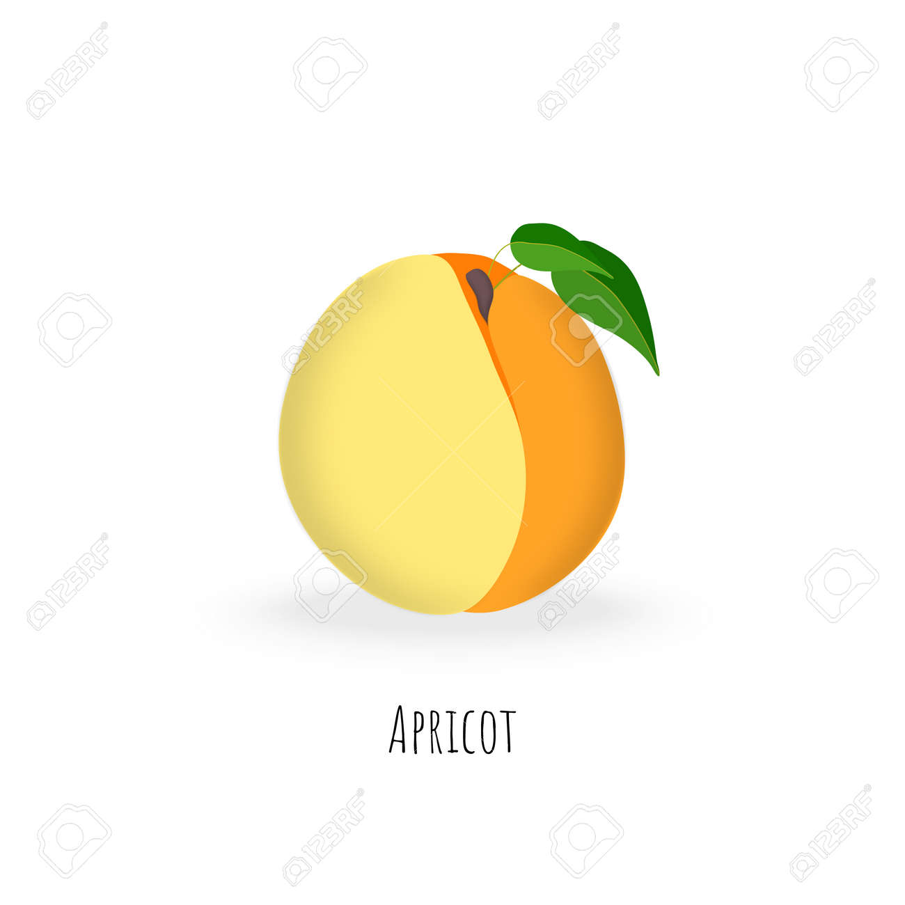 Single apricot fruit isolated on white background. Vibrant colored plump apricot with green leaves. Flat vector with shadows. - 168336291