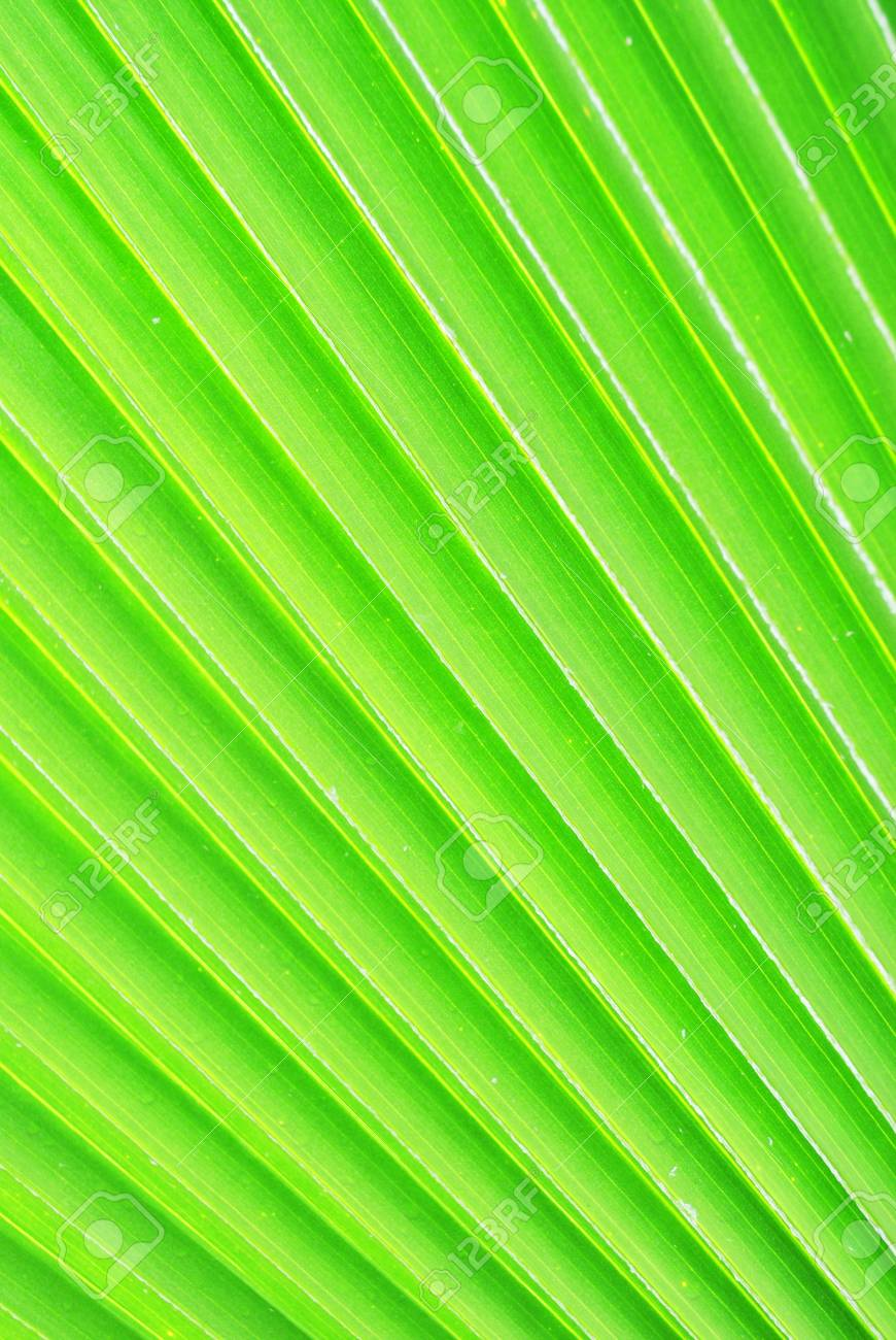 Close up of leaf pattern is in the garden Stock Photo - 9974181