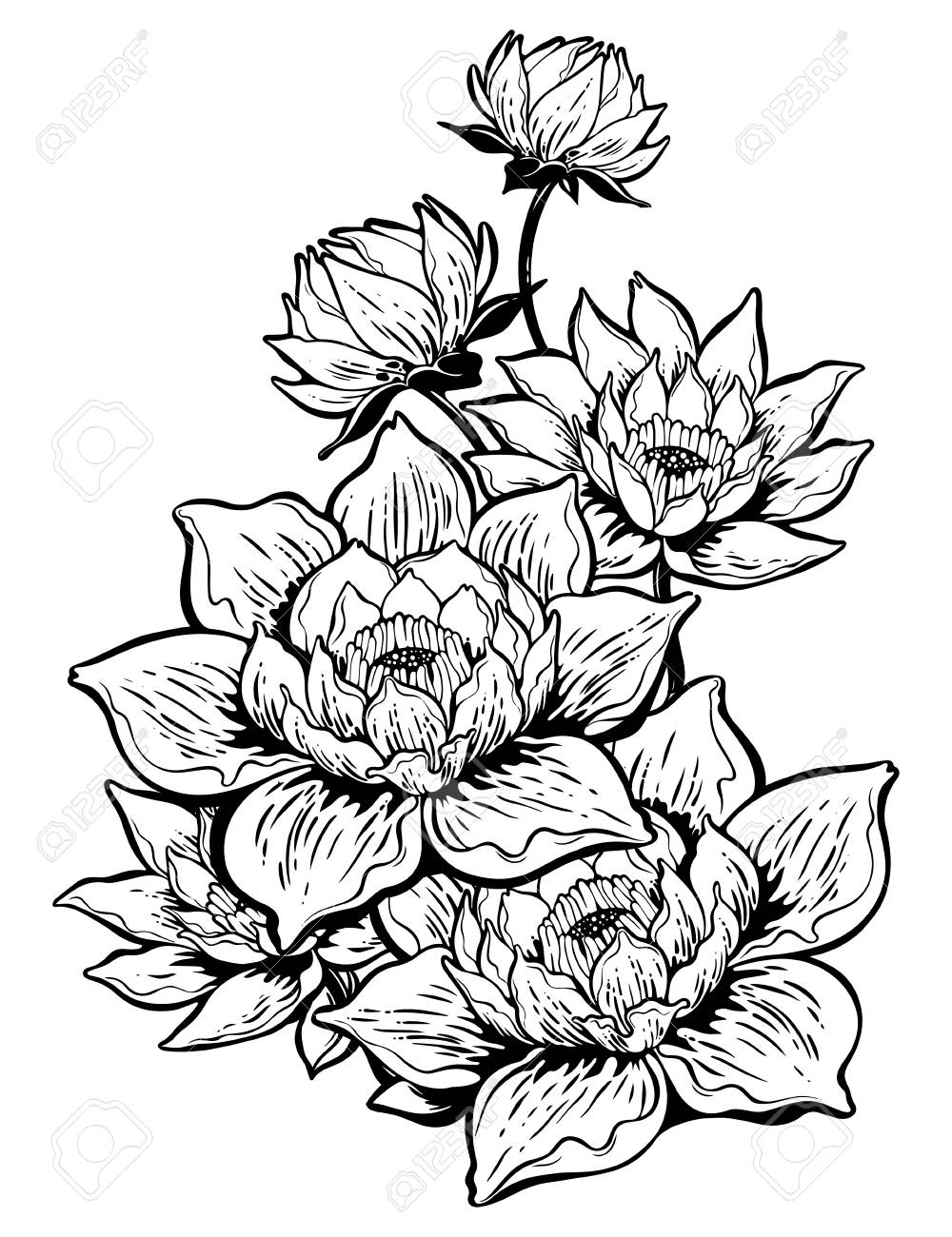 Lotus Lily Water Flower Stems In Bloom Asian Floral Element