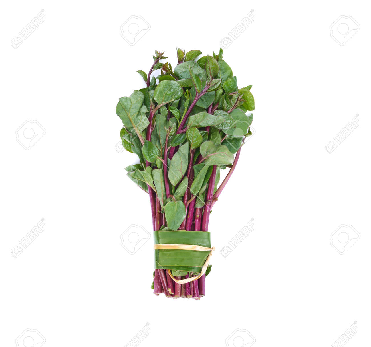 Ceylon spinach or Malabar spinach isolated on white background - 169847862